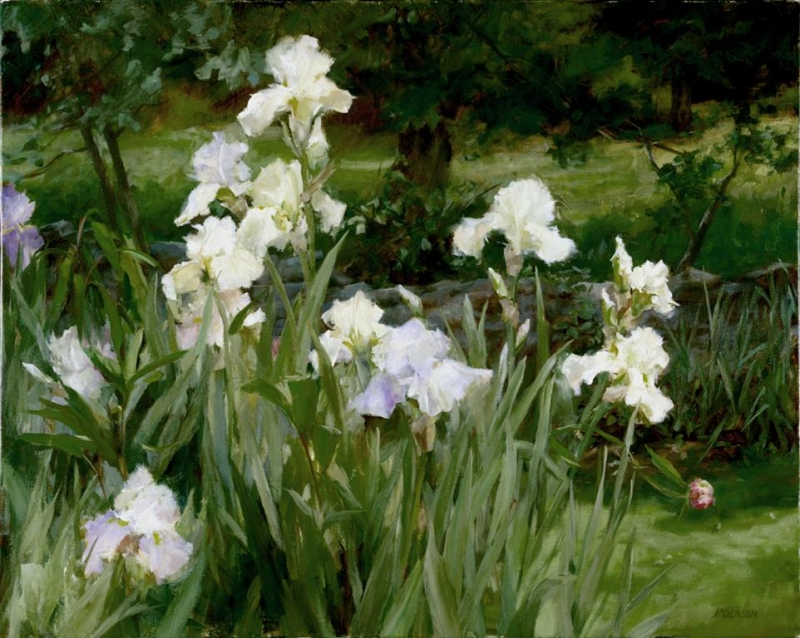 Irises by Kathy Anderson