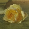 Rose Study by Diane Reeves